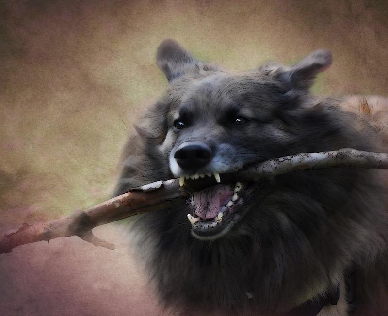 Ein Hundsleben...