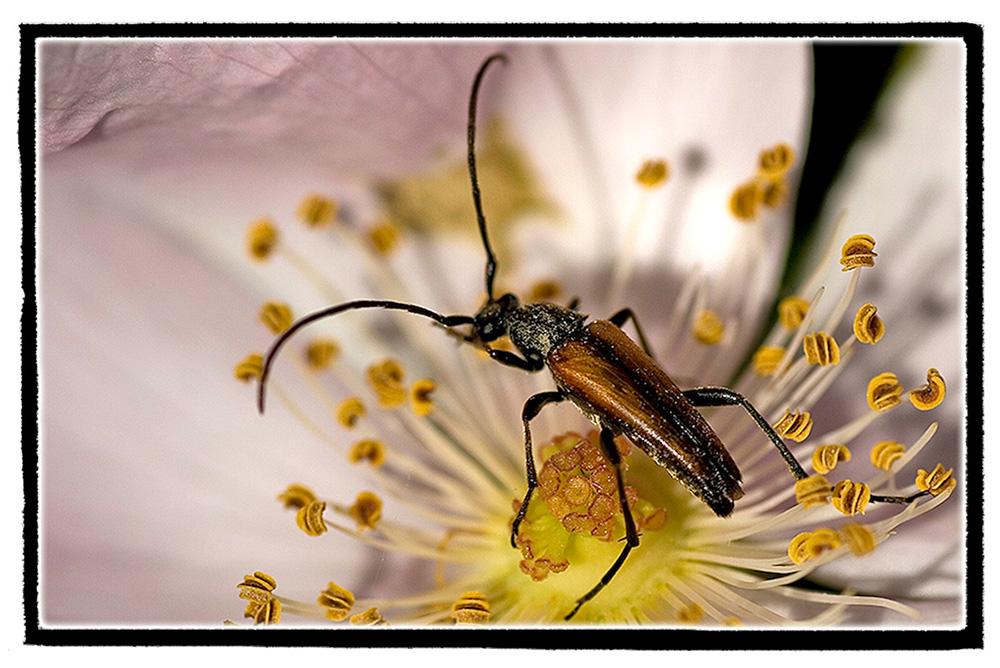 Ein Insekt....