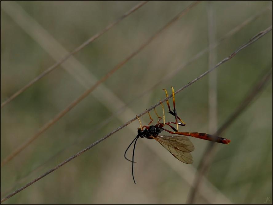 ein interessantes insekt...