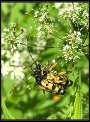 Ein Käfer und sein ANHANG
