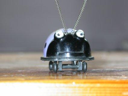 ein käferspitzer