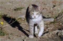 Ein Kätzchen aus Troja