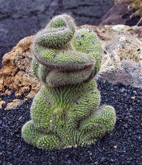 - ein Kaktus wie ein Frosch ...