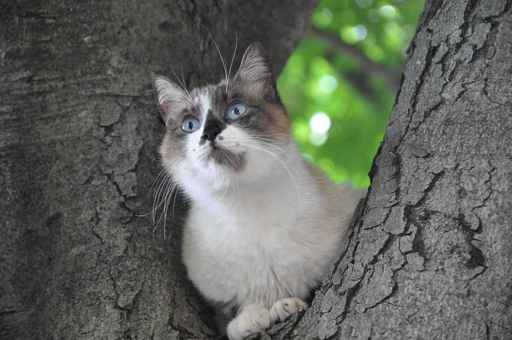 Ein Kater in Norditalien welcher vor dem Hund auf den Baum flüchtete