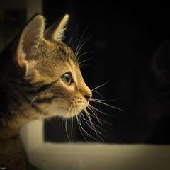 ein Katzenportrait