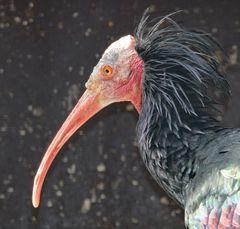 Ein kauziger Vogel