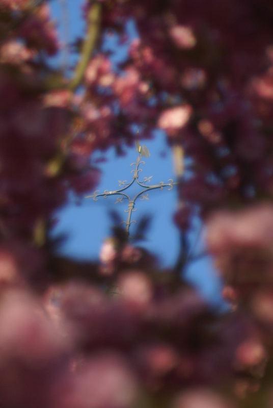 EIn Kirchturmspitze im Baum