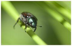 ein kl. Käfer