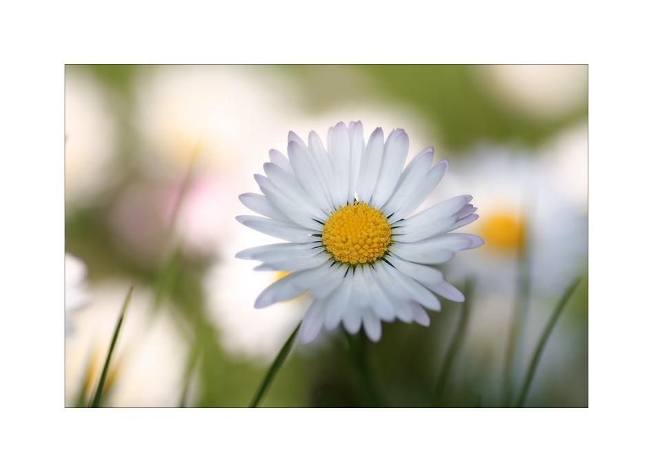 Ein Klecks Frühling...