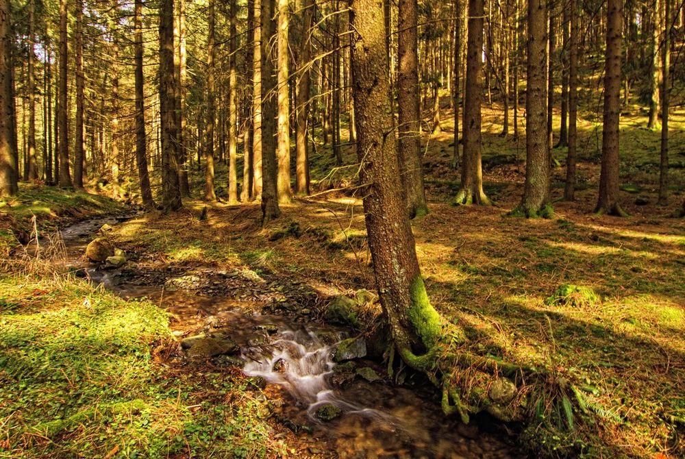 Ein kleiner Bach im Wald