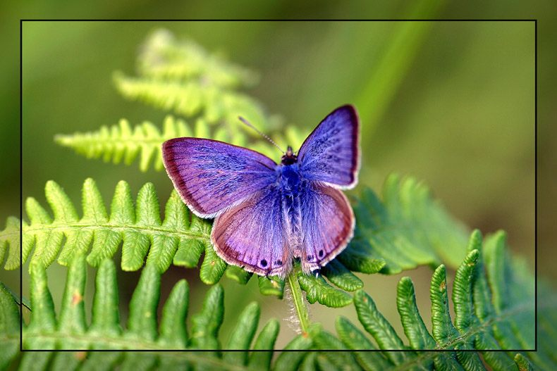 Ein kleiner Blauer