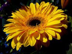 Ein kleiner Blumengruss