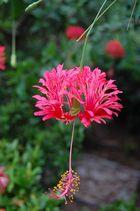 Ein kleiner Blumengruß aus Thailand gegen die Kälte