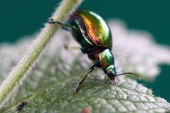 ein kleiner bunter Käfer