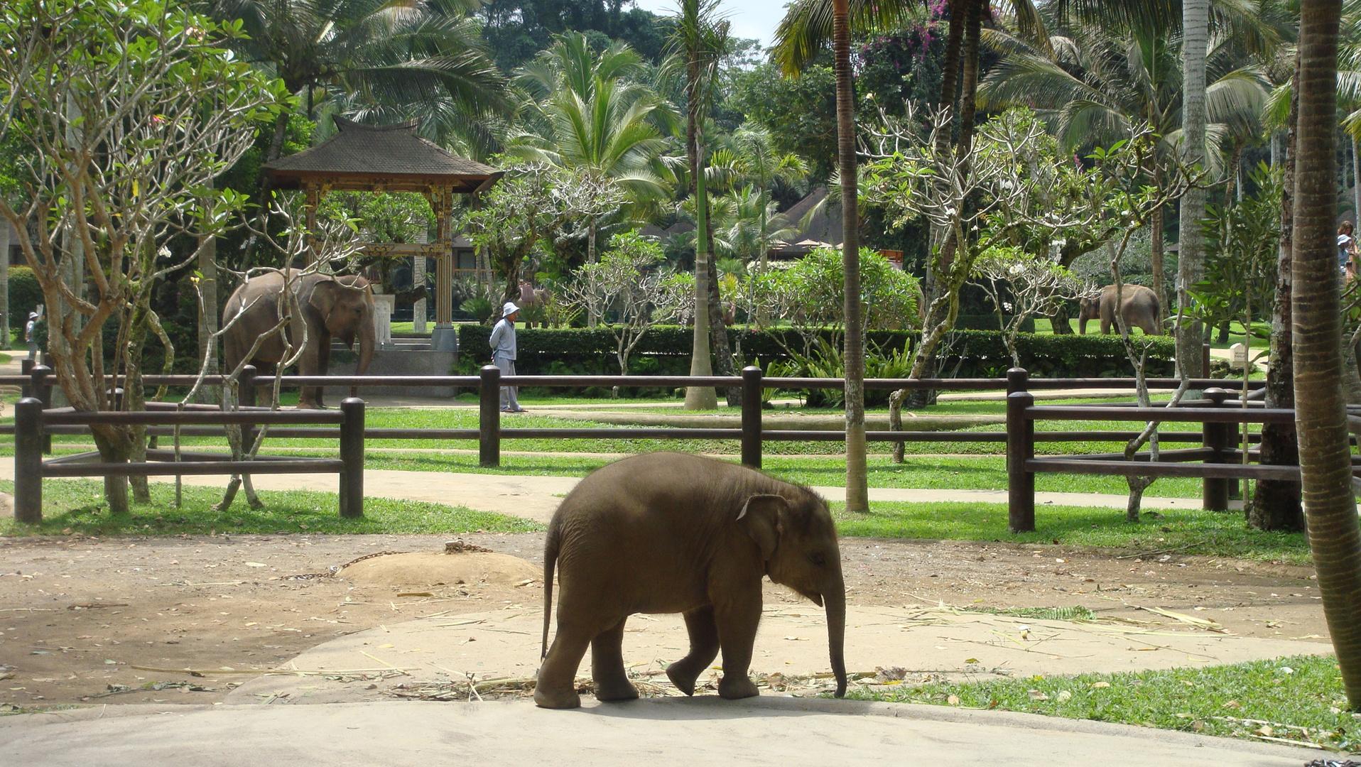 Ein kleiner Elefant.....;-)