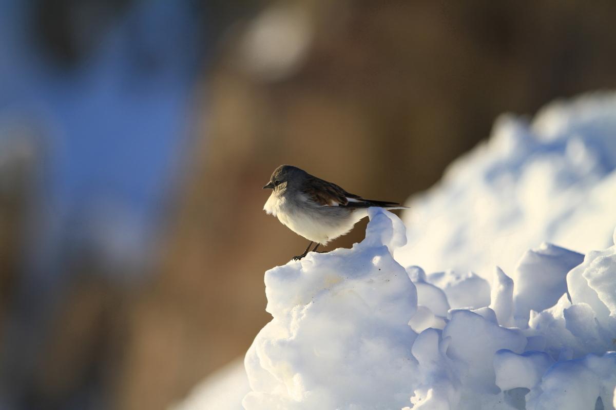Ein kleiner Freund in den verschneiten Dolomiten