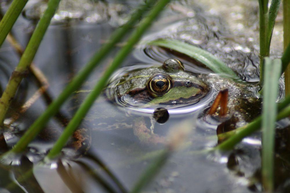 Ein kleiner Frosch von hexipola