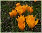 Ein kleiner Frühlings-Gruß
