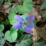 Ein kleiner Frühlingsgruss ( 6 )...