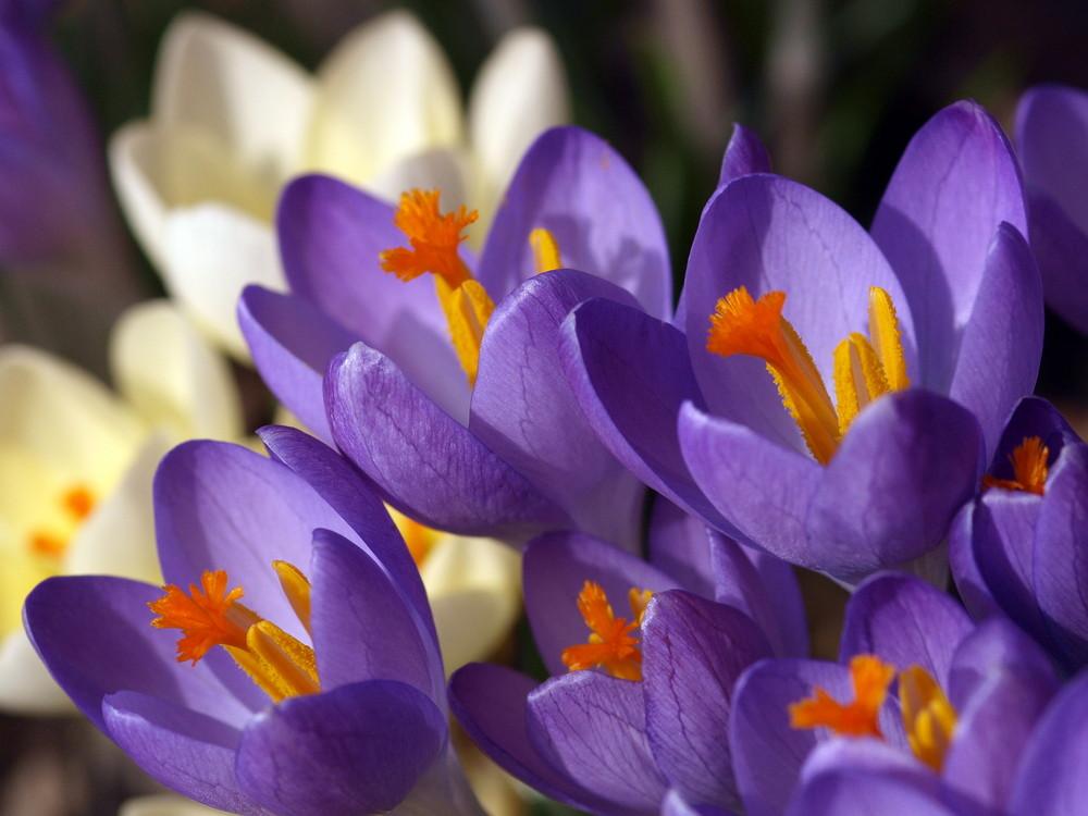 ein kleiner Frühlingsgruß...