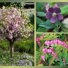 Ein kleiner Frühlingsgruß zum Wochenende
