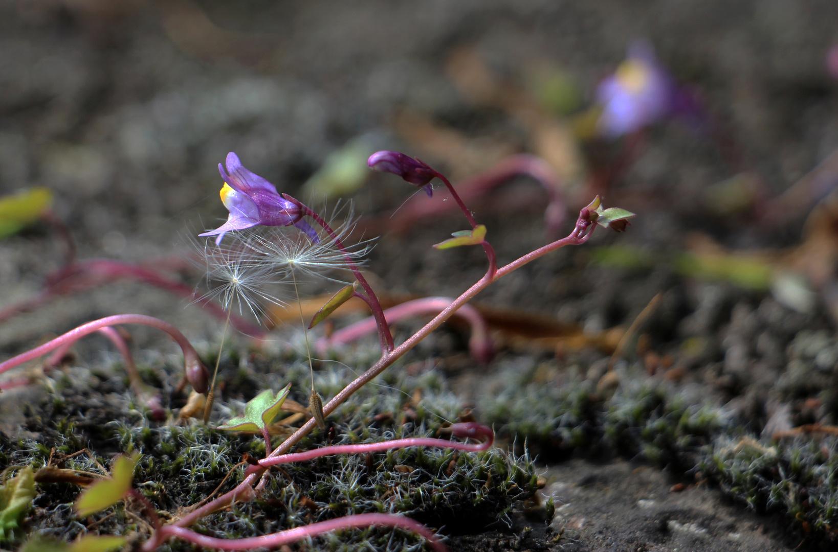 ein kleiner Frühlingskosmos