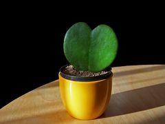 """""""ein kleiner grüner Kaktus"""""""