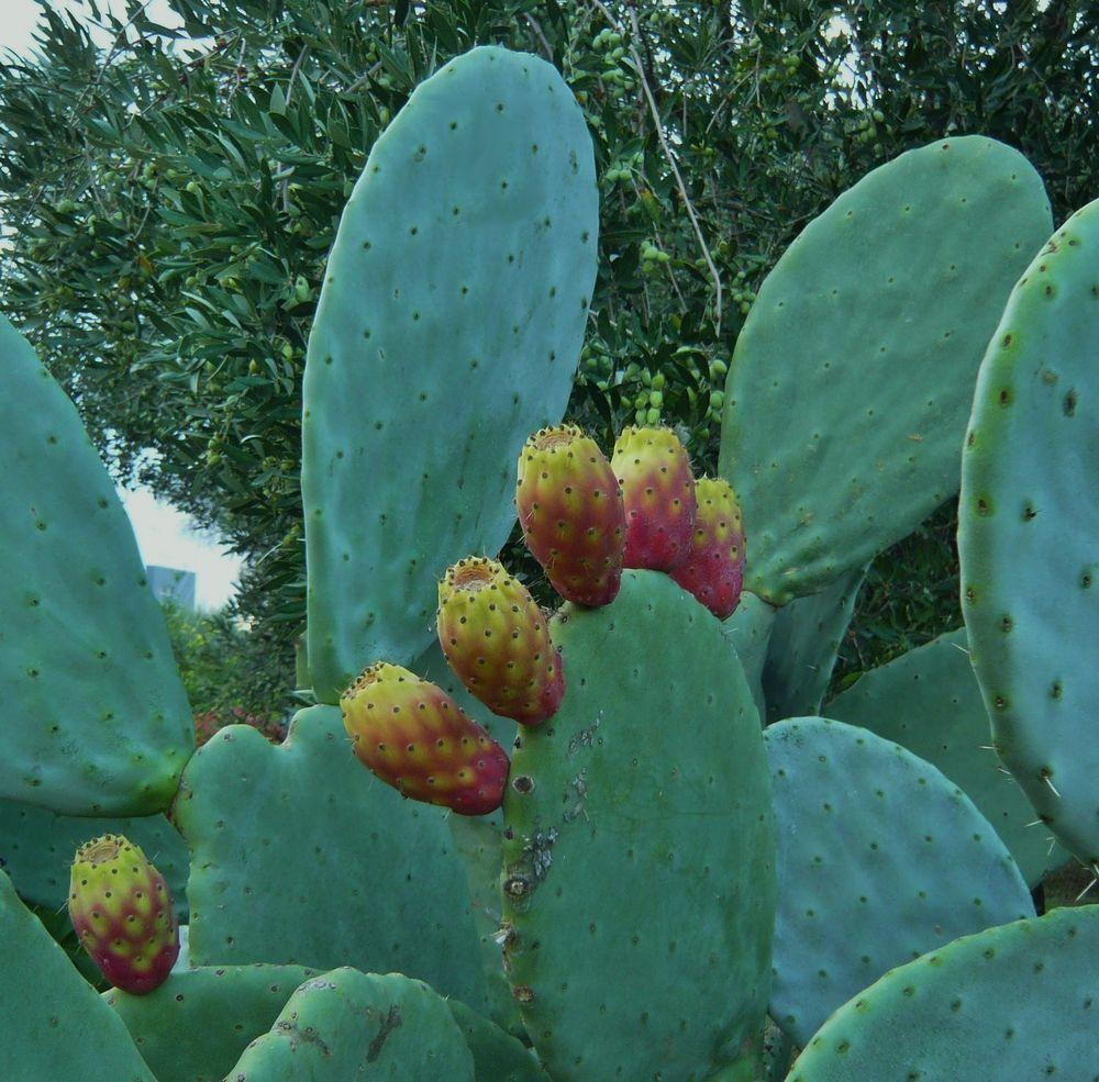 Ein kleiner grüner Kaktus