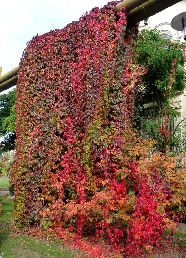 Ein kleiner Herbstgruß
