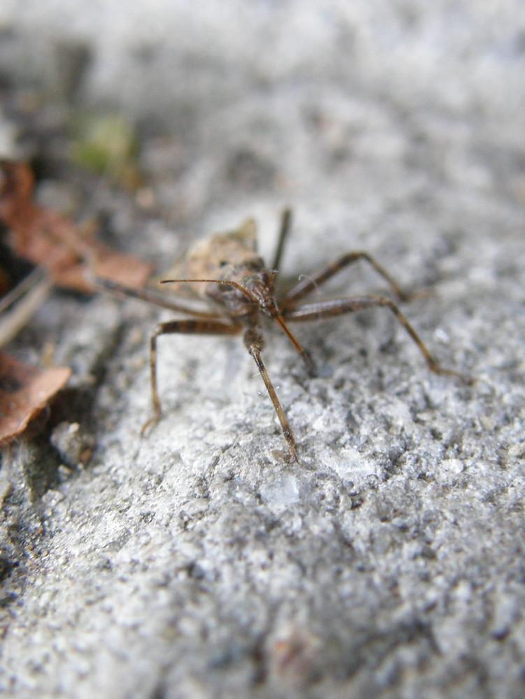 Ein kleiner Käfer mal ganz groß