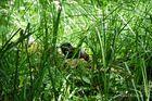 Ein kleiner Otter aus dem Spreewald