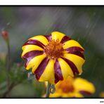 Ein kleiner Regenschirm :)