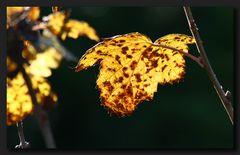 Ein kleiner Teil des Herbstes
