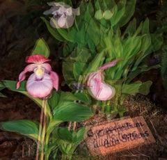 Ein kleiner Veranstaltungstip - für Orchideenfans