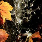 Ein kleiner Wasserfall  mit Herbstlaub