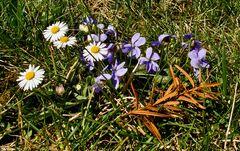 Ein kleines Fleckchen Frühling!
