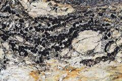 Ein kleines Kunstwerk auf einem grossen Felsen! * - Des lichens noir sur un rocher blanc...