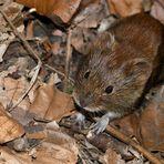 Ein kleines Mäuschen...