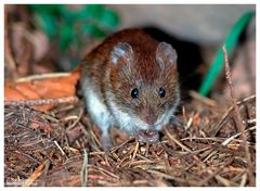 ---- Ein kleines Mäuschen ----