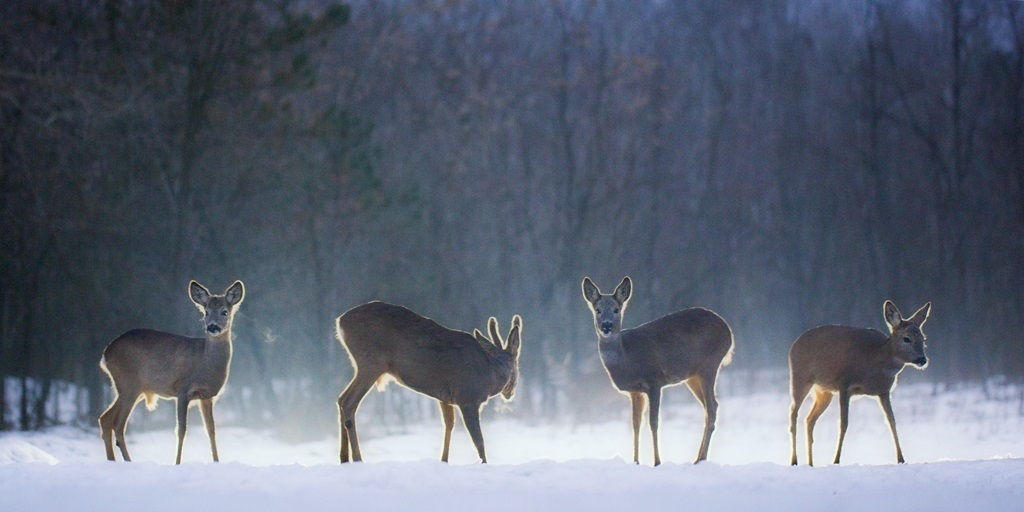 Ein kleines Rudel im Winterwald