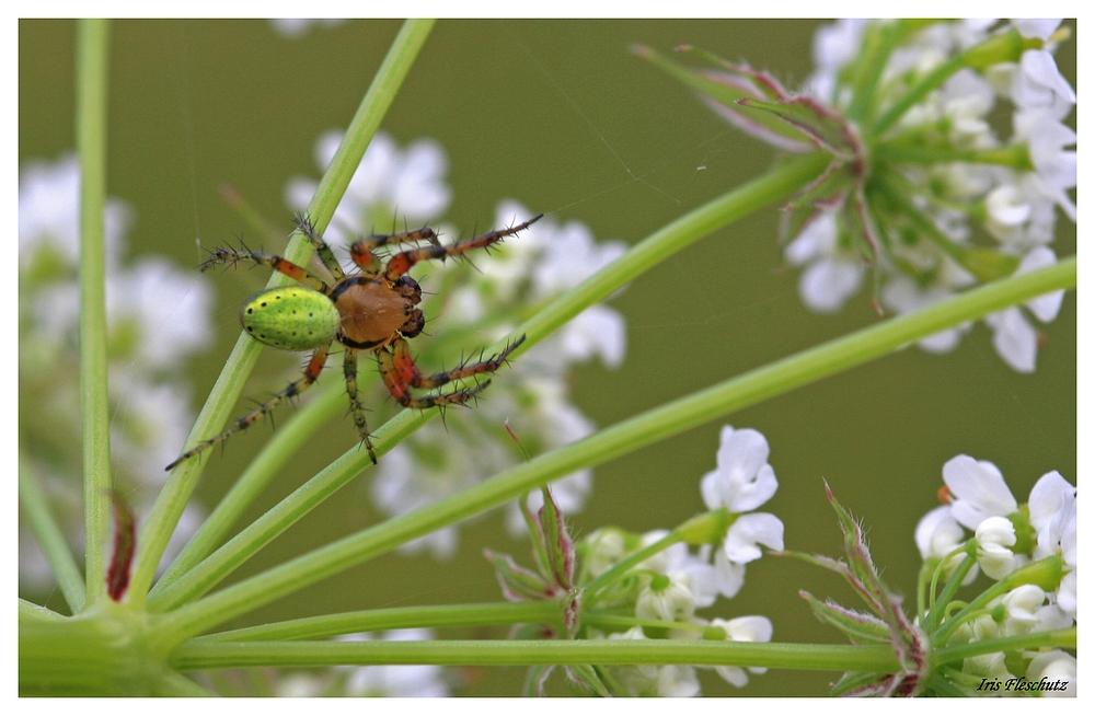 Ein kleines Spinnchen