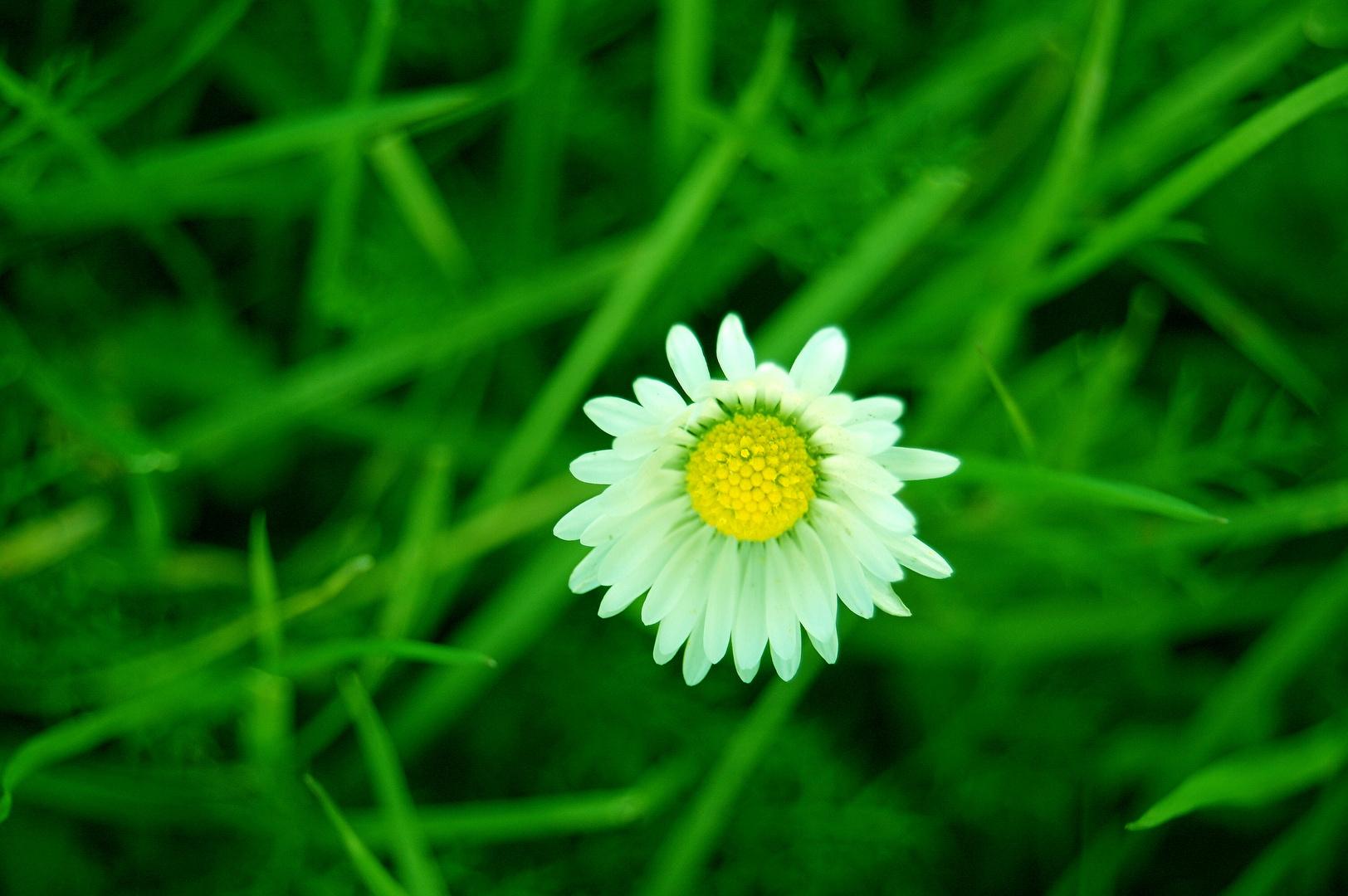 Ein kleines Stück Natur....2