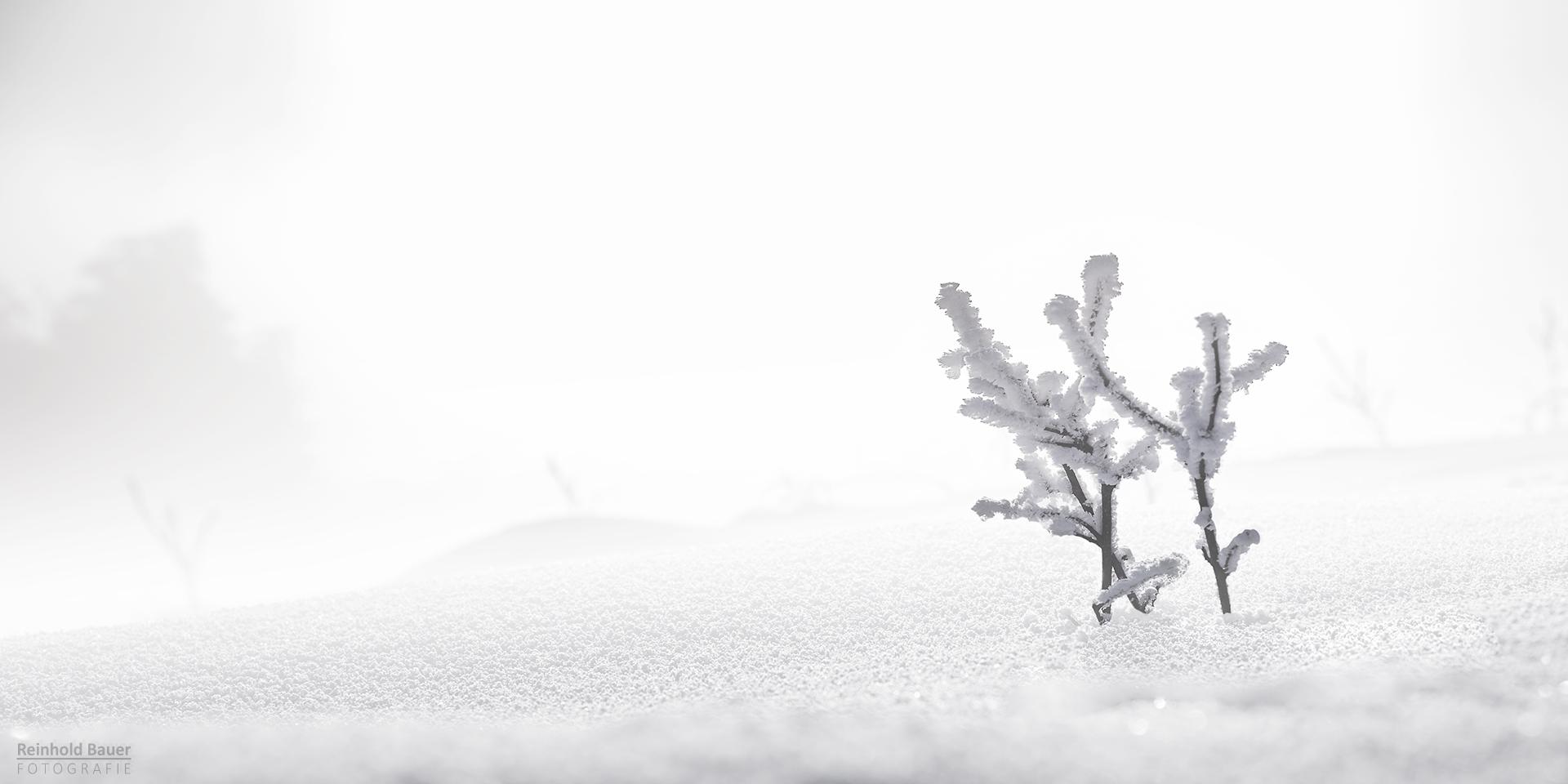 Ein kleines Stück Winter