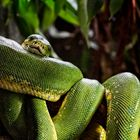 Ein Knoten in Grün!