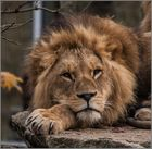 Ein König