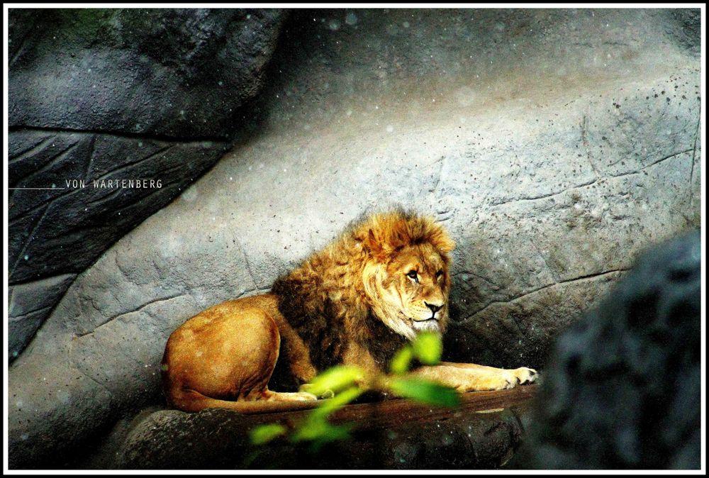 Ein König im Regen