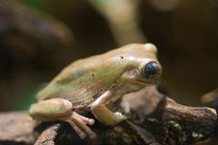 Ein komischer Frosch