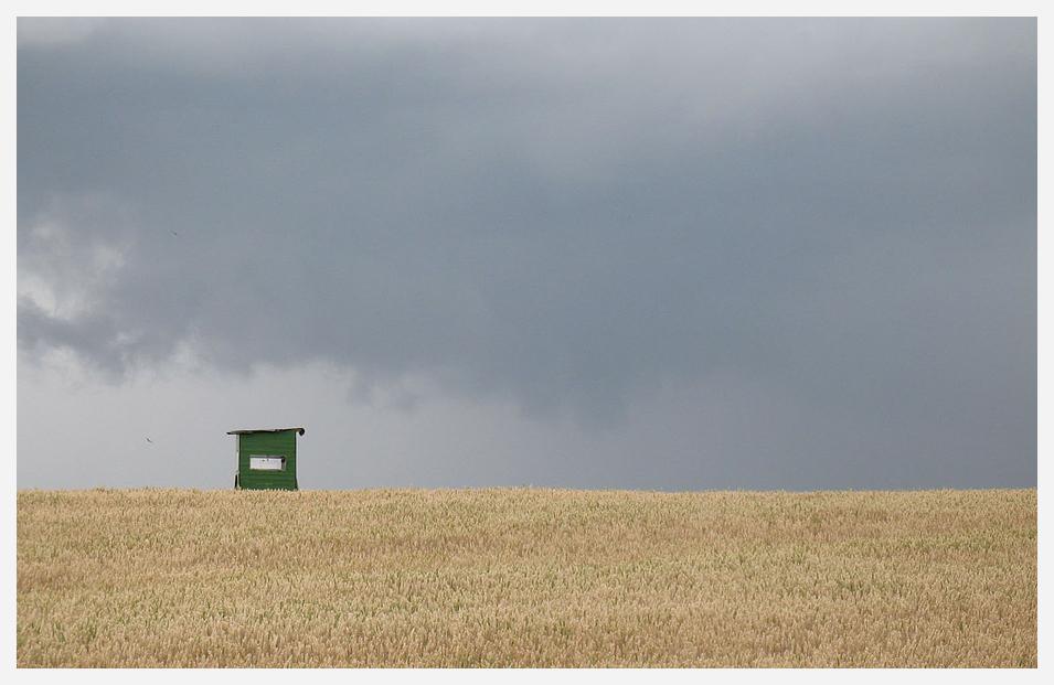 Ein Korn im Feldbett