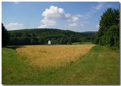 Ein Kornfeld im Hohen Vogelsberg