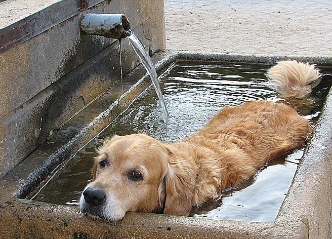 Ein kühles Bad.....